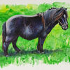 Pferde, Wiese, Pony, Shetland pony