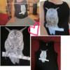 owl of alex -