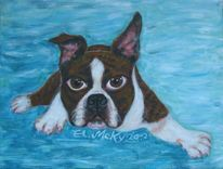 Hund, Awesome, Lustig, Boston terrier