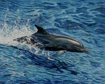 Tiere, Atlantik, Tierportrait, Nass