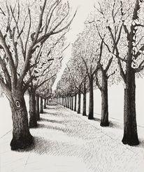 Luzern, Allee, Baum, Jahreszeiten