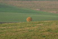 Baum, Weide, Wiese, Fotografie