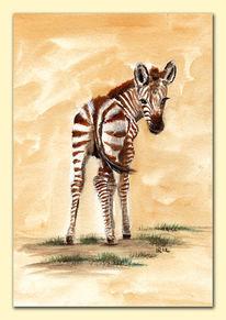 Baby, Streifen, Afrika, Zebra