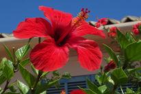 Blumen, Rot, Fotografie
