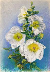 Weiß, Kreide, Duft, Rose