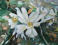 Blüte, Magnolien, Aquarellmalerei, Frühling