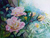 Blumen, Rose, Aquarellmalerei, Blüte