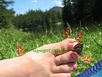 Schmetterling, Fotografie, See, Steiermark