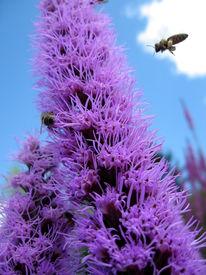 Kräutergarten, Biene, Fotografie, Surreal