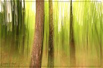 Lightpainting, Frühling, Baum, Grün