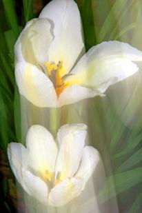Lichtmalerei, Blüte, Lightpainting, Duft