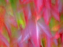 Wischeffekt, Herbstblätter, Lichtmalerei, Lightpainting