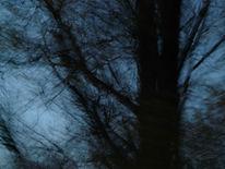 Zweiggespinst, Baum, Dunkel, Stamm
