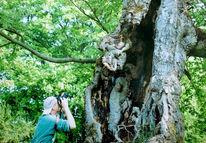 Baum, Üch, Pinnwand