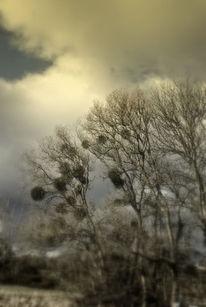 Wolken, Baum, Himmel, Licht