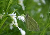 Frühling, Blüte, Schmetterling, Fotografie