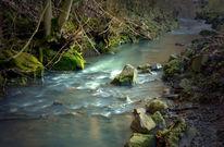 Leben, Wasser, Fluss, Fotografie