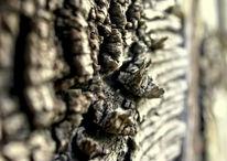 Holz, Alt, Fachwerk, Fotografie