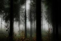 Nebel, Wald, Zauber, Baum