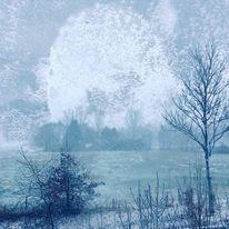 Erscheinung, Winternacht, Baum, Strauch