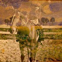 Pferde, Blumen, Zaun, Wolken
