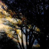 Busch, Blattwerk, Licht, Baum