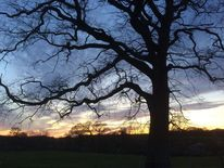 Himmel, Baum, Baumarme, Sonnenuntergang