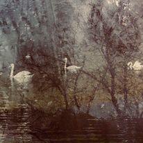 Spiegelung, Nebel, See, Schwan