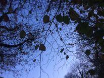 Blätter, Himmel, Fotografie,