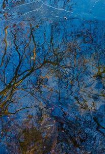 Wasser, Spiegel, Baum, Zweig