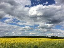 Bienenweide, Maiday, Wolkenozean, Fotografie