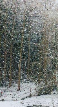 Baum, Wald, Ausschnitt, Fotografie