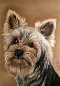 Pastellmalerei, Hundeportrait, Malerei, Tiere