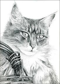 Katze, Zeichnungen, Portrait, Main
