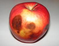 Apfel, Wahrheit, Fotografie, Pflanzen