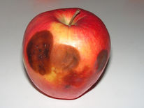 Wahrheit, Stadium, Apfel, Fotografie