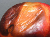 Stadium, Wahrheit, Apfel, Metamorphose