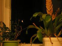 Sichel, Wohnzimmer, Mond, Fenster