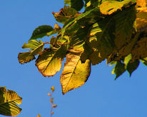 Herbst, Sonnig, Blätter, Fotografie