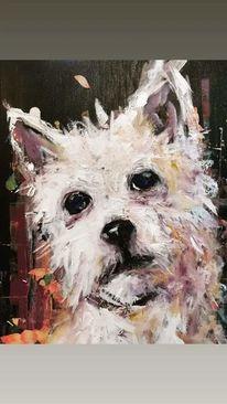 Hund, Haustier, Tiere, Terrier