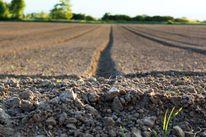 Fotografie, Landwirtschaft, Feldweg, Natur