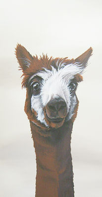 Portrait, Kamel, Alpaka, Lama