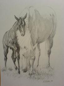 Pferde, Zeichnungen, Tiere
