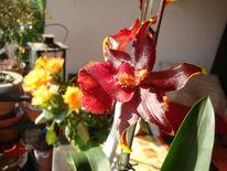 Fotografie, Stillleben, Frau, Orchidee