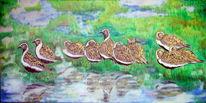 Vogel, Ölmalerei, Goldregenpfeifer, Wasser
