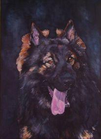 Schäferhund, Treu, Hundeportrait, Wachsamm