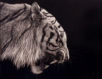 Augen, Tierwelt, Realismus, Tiere