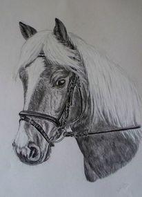 Pferdeportrait, Kohlezeichnung, Zeichnungen, Liebe