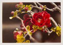 Malerei, Bonsai, Blüte
