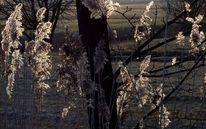 Licht, Schatten, Gras, Fotografie